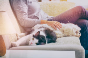 5 Features to Seek Out In Pet-Friendly Apartments
