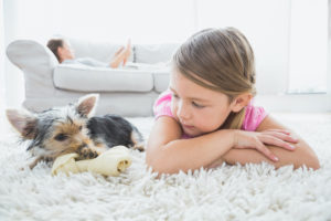 Helpful Tips for Apartment Moving with Your Pets
