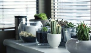 Some of the Best Plants for Your Family Apartment